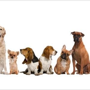 Mayachok Dog Day